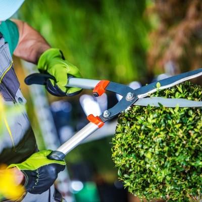 Contratar jardineiro para manutenção de jardim
