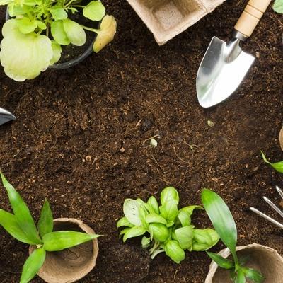 Contratar jardineiro para preparar o solo