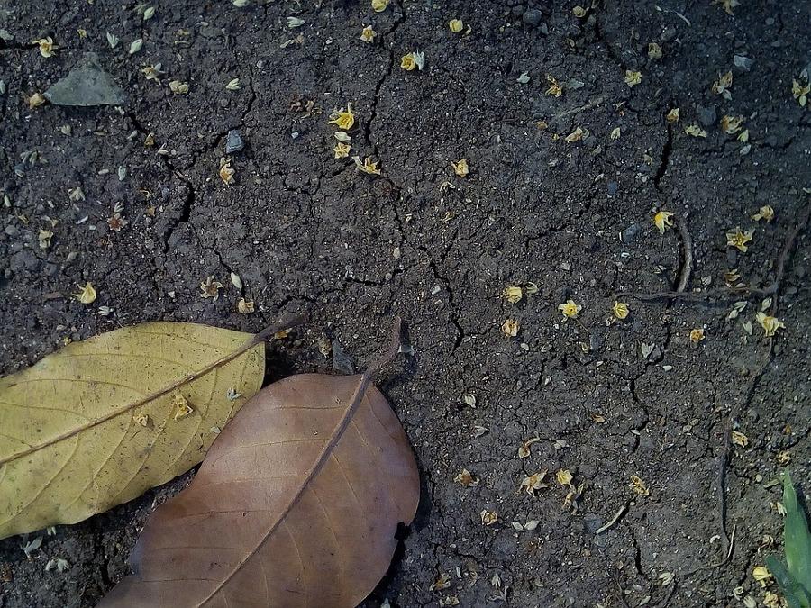 Solo humífero pode ser compactado para agricultura