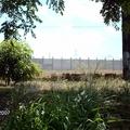 Muro em placas de concreto, Paulo Afonso/BA