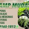 Camp Mudas