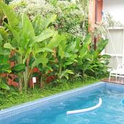 Piscina e vegetação