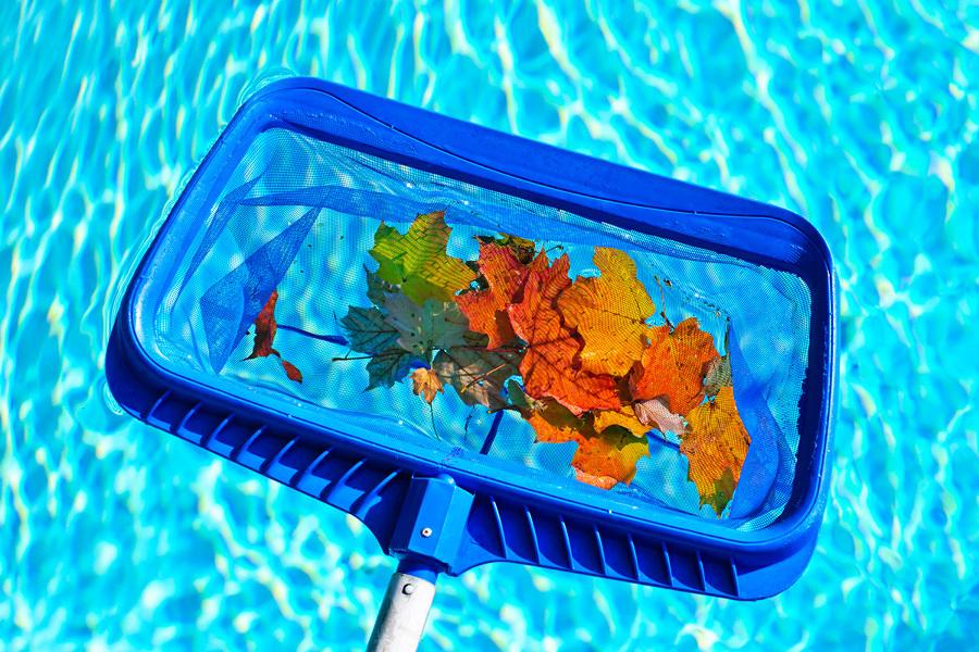 utensílio para recolher folhas