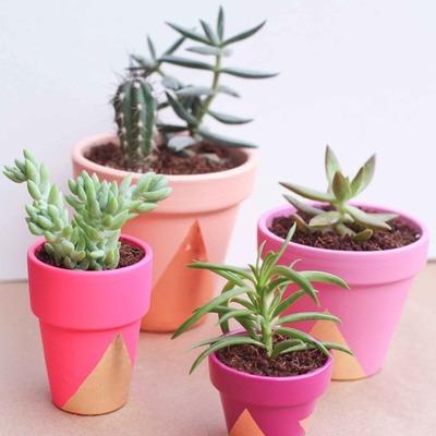 Ideias irresistíveis para decorar sua casa com cactos