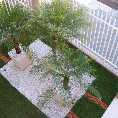 Dicas de jardinagem: como criar um jardim simples, bonito e fácil de cuidar