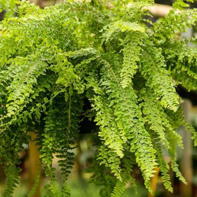 Plantas que trazem energia positiva e prosperidade para sua casa