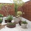 Plantar algumas flores,frutiferas e um pequeno gramado