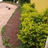 Manutenção e reformas de jardim