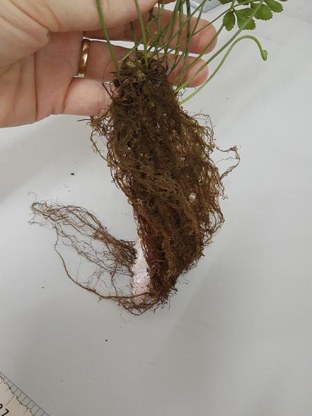 Que planta é essa?