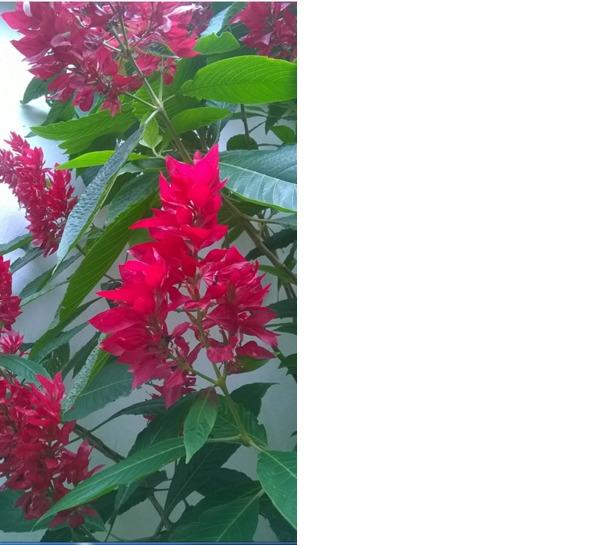 preciso saber que planta é essa e como a cultivo. Ela é linda, não é mesmo?