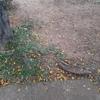 Podar Ou Retirar árvores