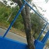 Podar árvore