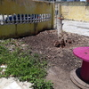 Plantar Gramado