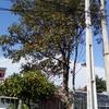 Valor da poda de uma árvore e a limpeza após realização do serviço ** urgente **
