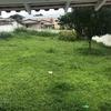 Cortar/recolher grama