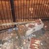 Execução de bloco de fundação e coluna falsa de tijolo de barro