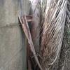 Supressão de árvore em atibaia