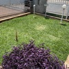 Limpar Jardim