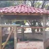Construção de viveiro para pássaros soltos