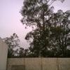 Corte de eucalipto grande